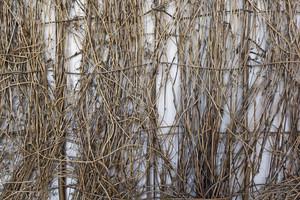 Wooden Texture 64