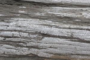Wooden Texture 67