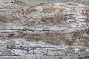 Wooden Texture 69