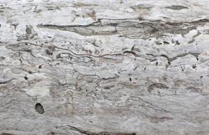 Wooden Texture 70