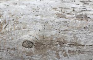 Wooden Texture 71