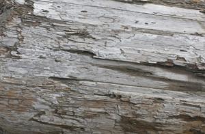 Wooden Texture 72