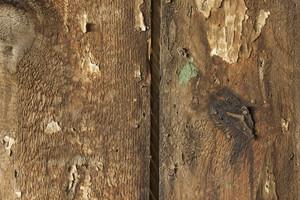 Wooden Texture 75