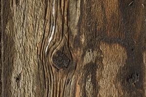 Wooden Texture 76