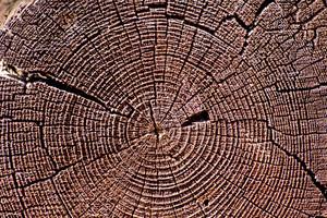 Wooden Texture 7
