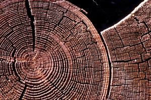 Wooden Texture 8