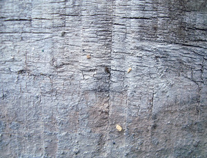 Wooden_close_up_texture