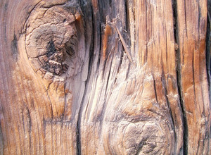 Wooden_knot_pattern_in_old_wood