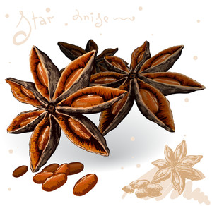 World Spices. Star Anise. Vector.