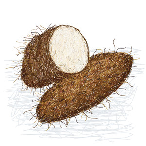 Yam Cross-section