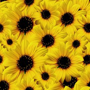 Yellow-daisy-pattern  Seamless Texture