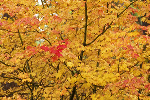 Yellow Fall Background