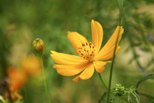 Yellow flowers on blur bokeh background