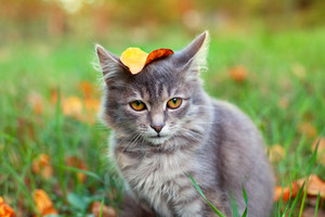 Yellow leaf on kittens head