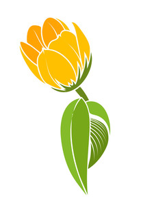 Yellow Tulip Design