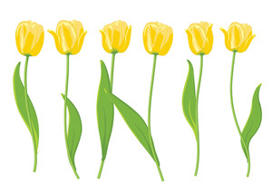 Yellow Tulips. Vector Illustration