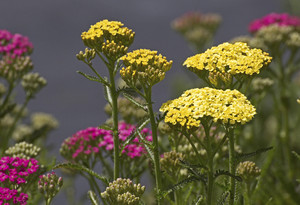 Yellow Wildflowers Picture