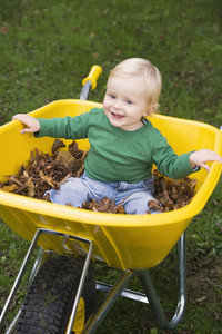 Young boy sitting in wheelbarrow of autumn leaves