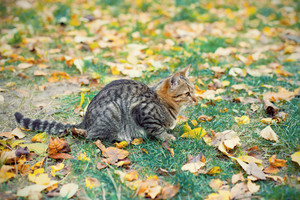 Young cat sitting on green grass covered with dry leaves