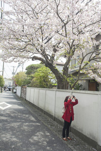 Young woman with standing on road and taking a photo cherry blossom
