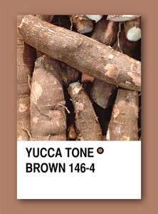 Yucca Tone Brown. Color Sample Design