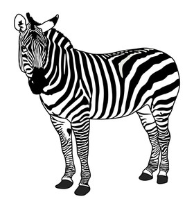 Zebra Animal Silhouette