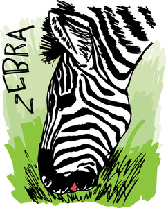 Zebra Eating Grass. Vector Illustration