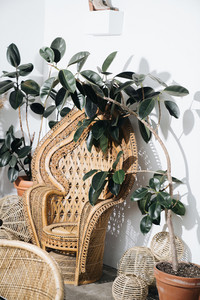 Woven chair with plants