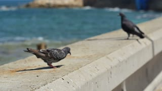A pair of pigeons sitting by the sea