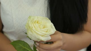 Female hands touching white rose