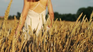 beautiful woman walking cross wheat field super slow motion, 240Fps