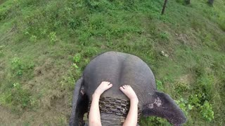 Aerial view of elephant ride with little girls legs resting on elephant�۪s head.