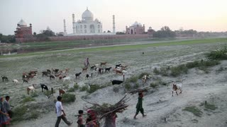 AGRA, INDIA - 26 FEBRUARY 2015: People and cattle walking down the field, with Taj Mahal in distance.