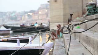 Bird on rope tied to boat on dock with man entering Ganges.