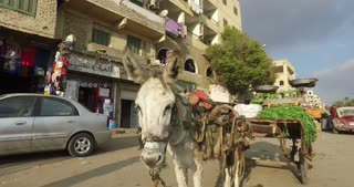 CAIRO, EGYPT - FEBRUARY 03, 2016: Donkey with cart alongside road in Giza
