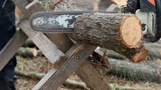 Chainsaw cutting firewood for the winter period