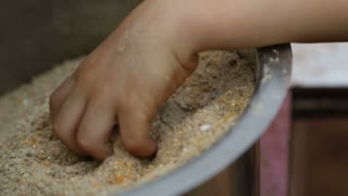 Children taking seeds for animals from a bowl.