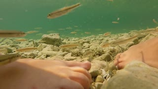 Close-up of feet of two girls standing in shallow water surrounded by fish