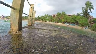 Close view of crabs walking on rocks at seaside in Sri Lanka.
