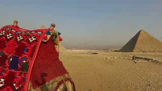 closeup of camel at Giza pyramids, Cairo, Egypt