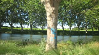 Cycling past trees on the canal du midi in France