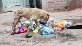 Dog going through garbage at street in Varanasi, with people passing.