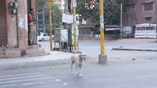 Dog passing the street in Jodhpur at crossroads.