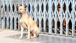 Dog sitting on a street of Mumbai, India, while man passing by.