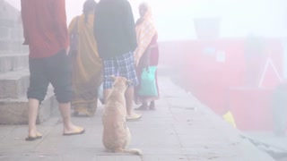 Dog sitting on ground while people are walking at dock of Ganges river.