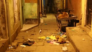 Dogs in laying at street filled with waste in Varanasi.
