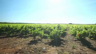 Driving past vineyard in the south of France.