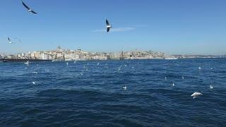 Flock of seagulls at Bosphorus sea in Istanbul, Turkey