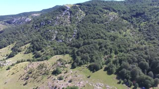 Flying above thick forest with grass plains