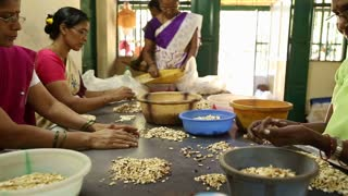 GOA, INDIA - 20 JANUARY 2015: Women picking and sorting cashew nuts.